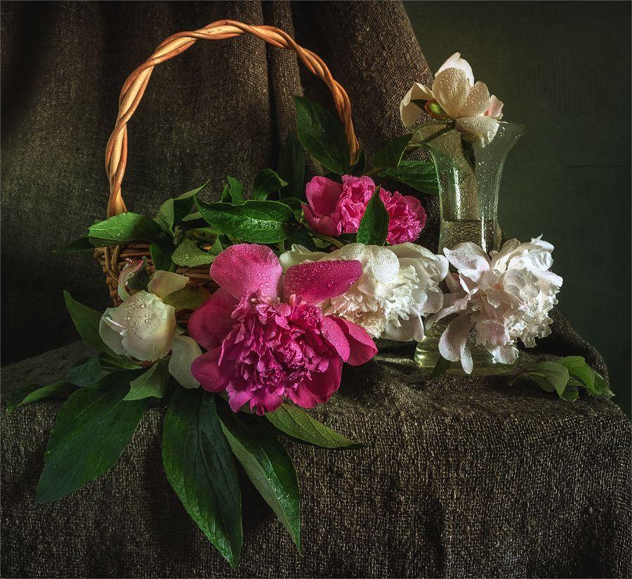 still life, натюрморт,     цветы,  пионы, капли,, Шерман Михаил