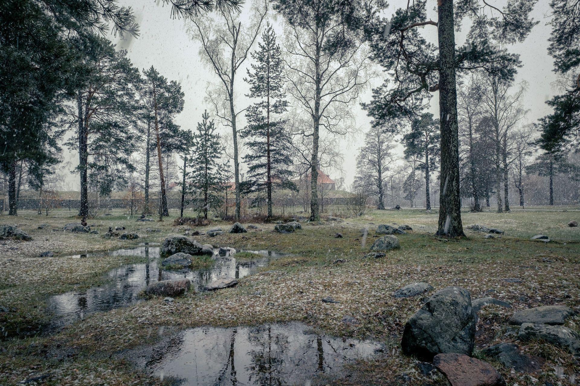 приозерск, корела, крепость, снег, деревья, лужа, камни, пейзаж, природа, Чиж Андрей