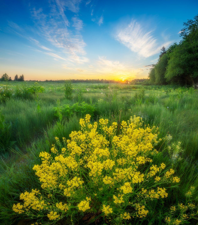 ленобласть, лето, восход, поле, Марголин Алексей