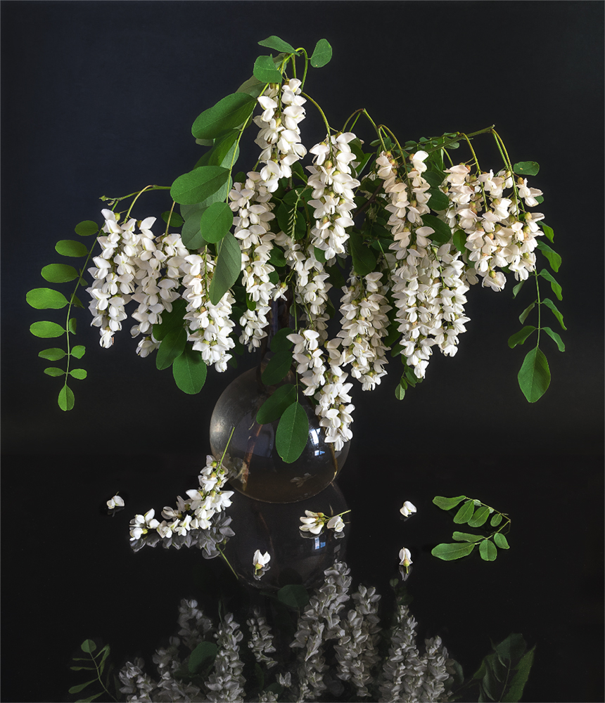 still life, натюрморт,  цветы,  акация, отражение, аромат,, Шерман Михаил