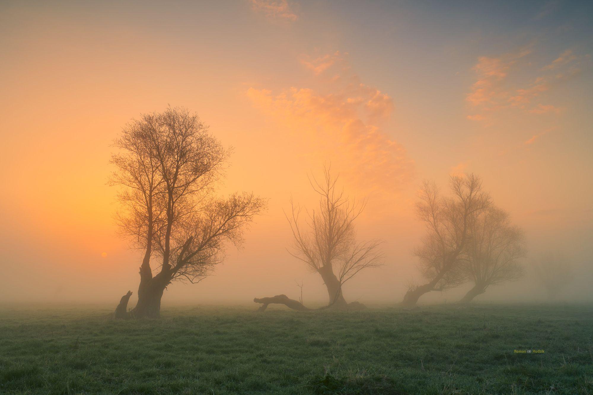 fog, landscape, sunrise, trees, sky, mystery, grass,, Hudzik Roman