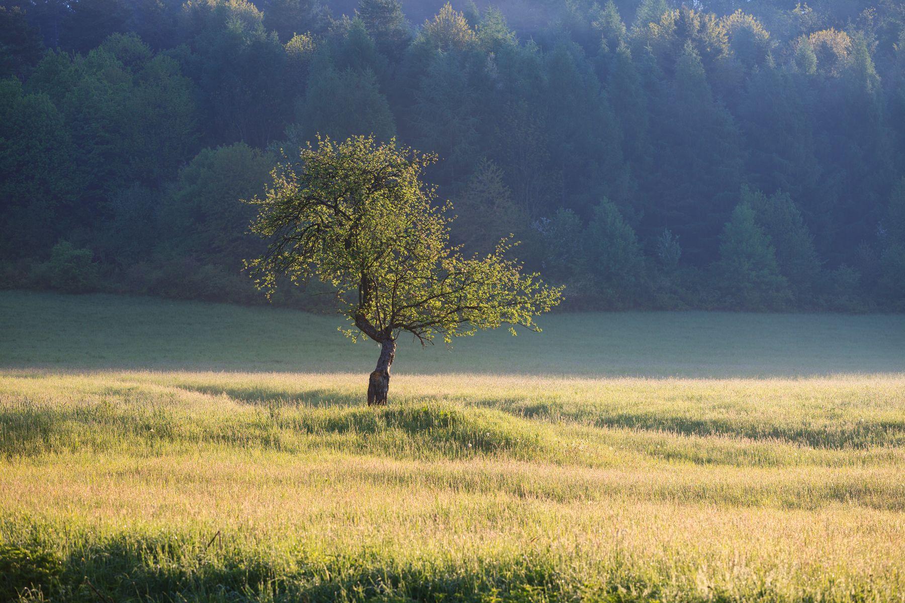 bieszczady, spring, mountains, green, sky, fog, morning, lanscape, tree,  Mirosław Pruchnicki