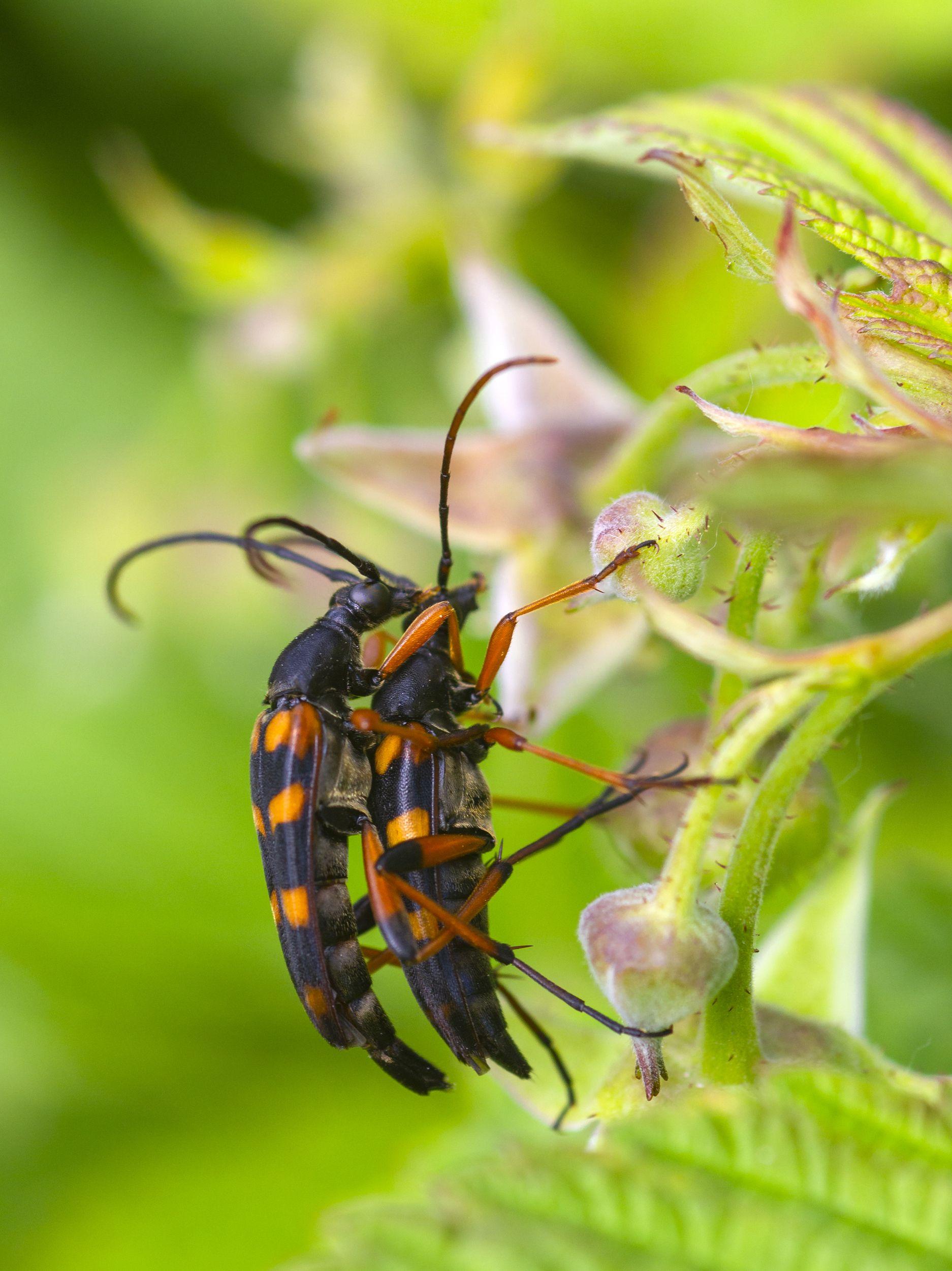 природа, лето, жуки, насекомые, жесткокрылые, Александр Кожухов