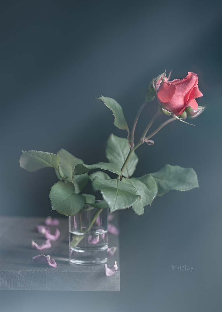 роза, блюр, софт эффект, Владимир Тузлай