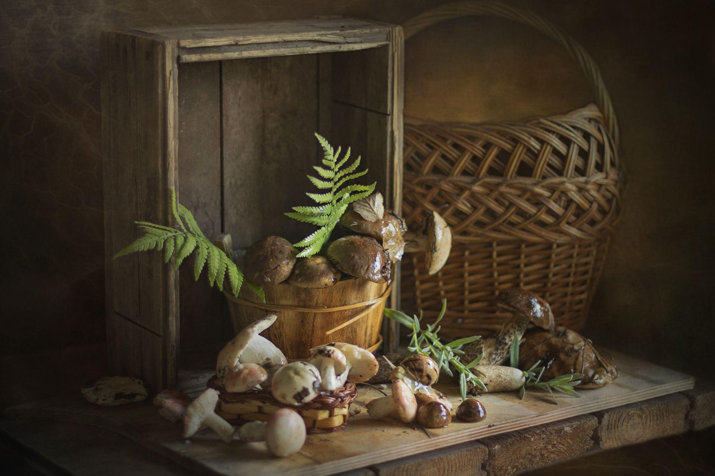 натюрморт, грибы, корзина, лето, лес, Зимина Лионелла