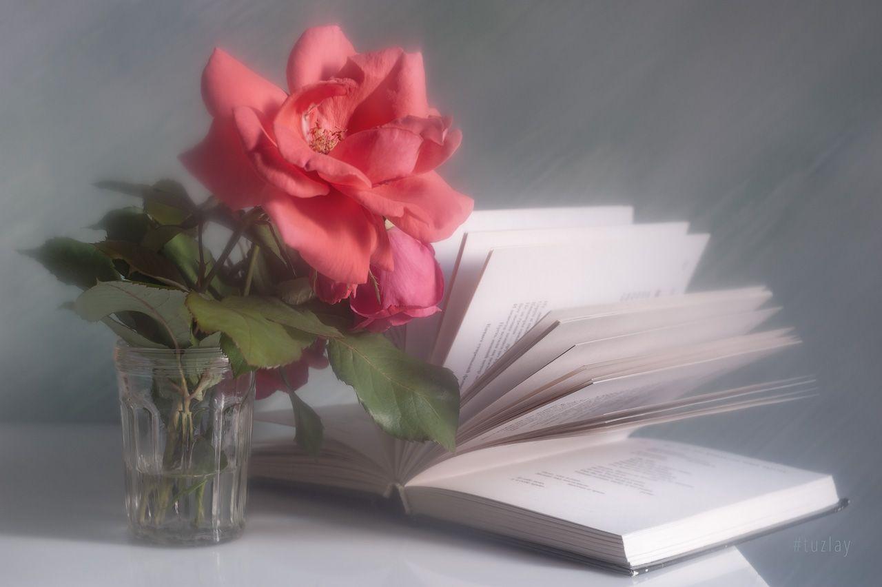 розы, книги, книга, Владимир Тузлай