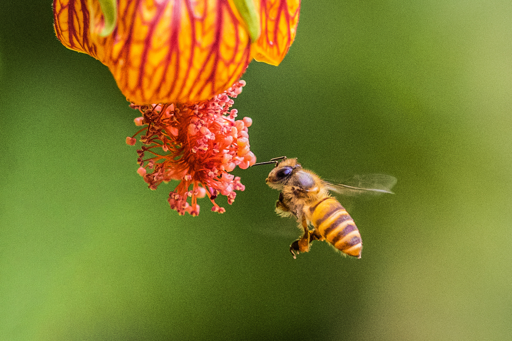 #bee #nature, Chan Benny