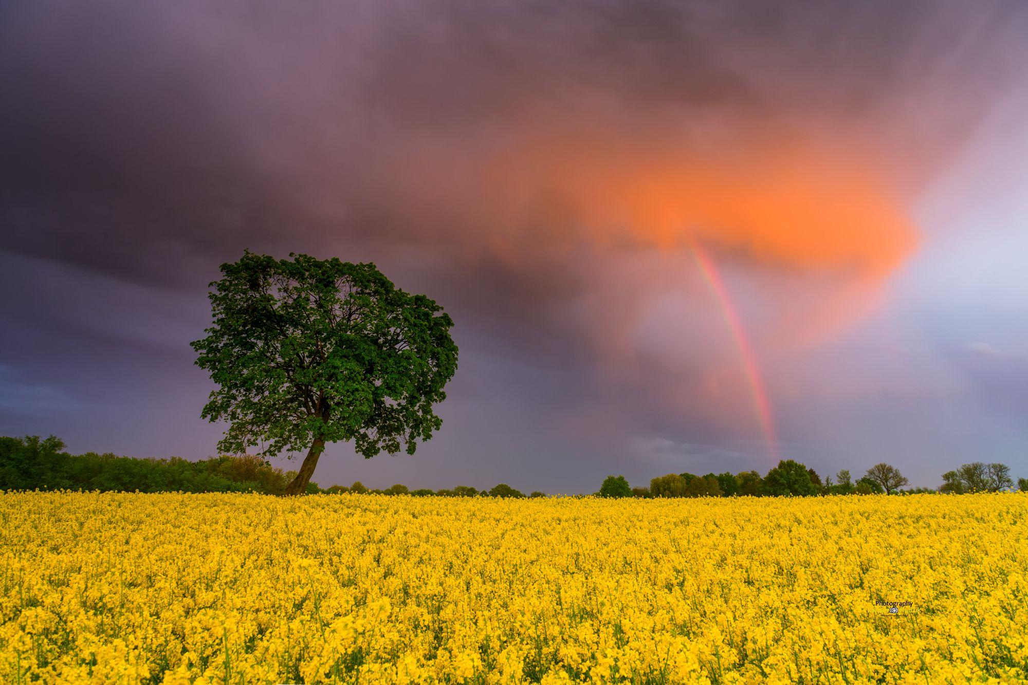 sunset, rainbow, landscape, Poland, Kociewie, clouds, sky, rape, fields, Hudzik Roman