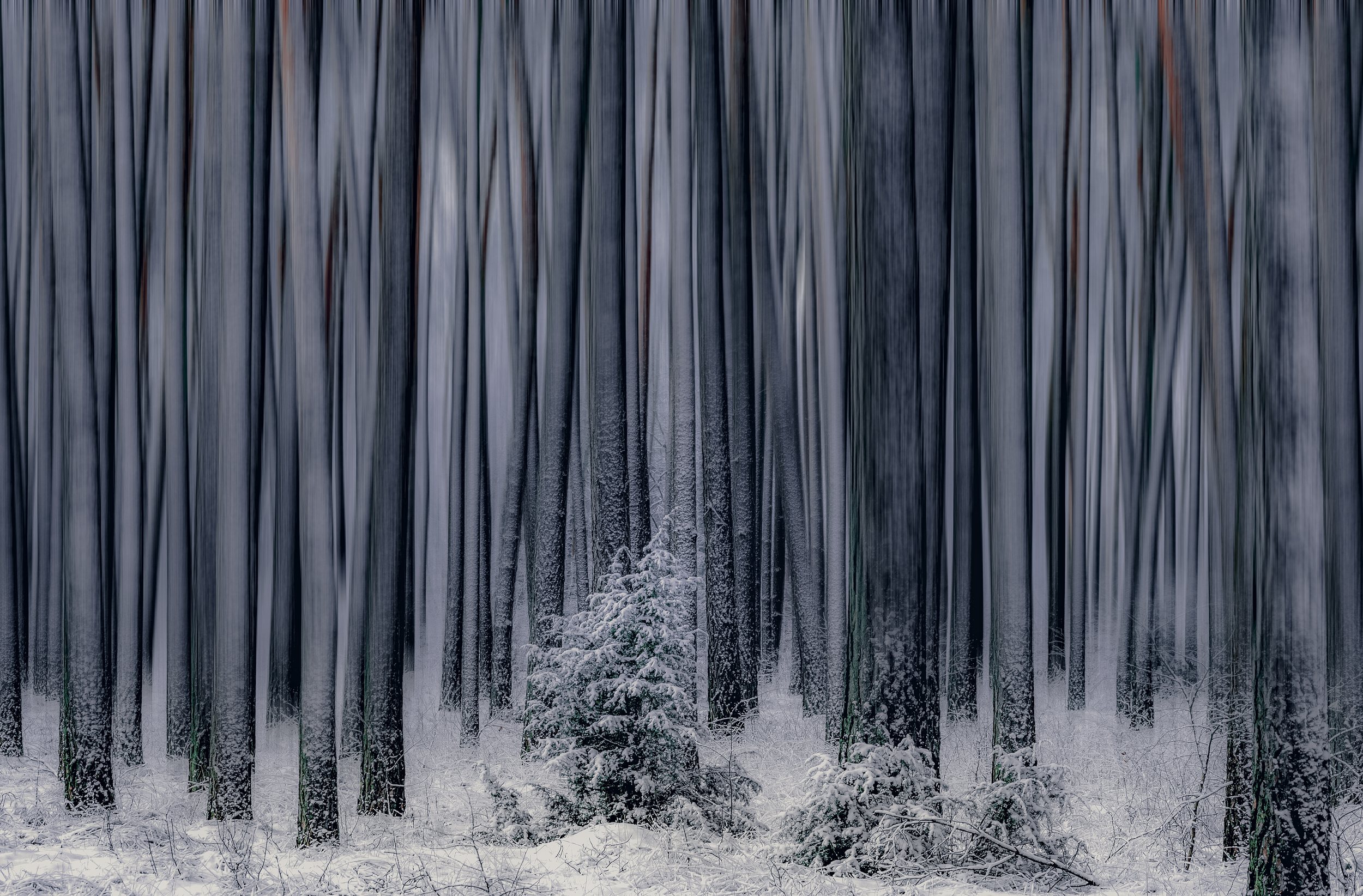 Forest  Nature  No People  Blurry Trees  Nikon  Winter  Snow  Morning  Trees, Tollas Krzysztof