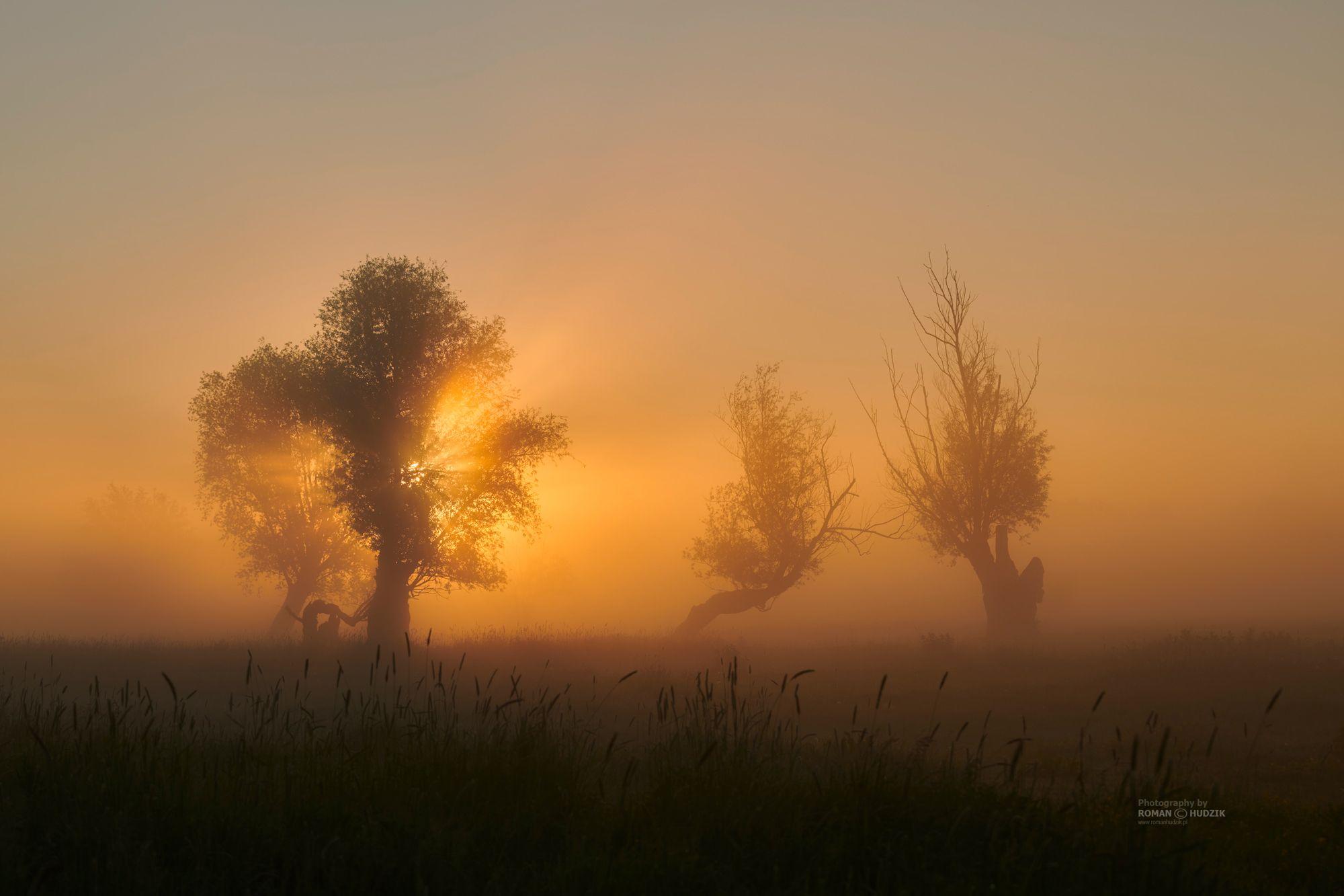 landscape, fog, Poland, trees, field, sunrise, Hudzik Roman