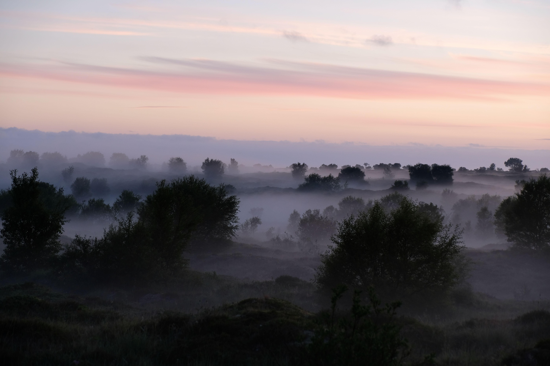 Landscapes, nature, night, colors, mood, pink, Norway, fog, mist, trees, forest, sky, clouds, , Povarova Ree Svetlana