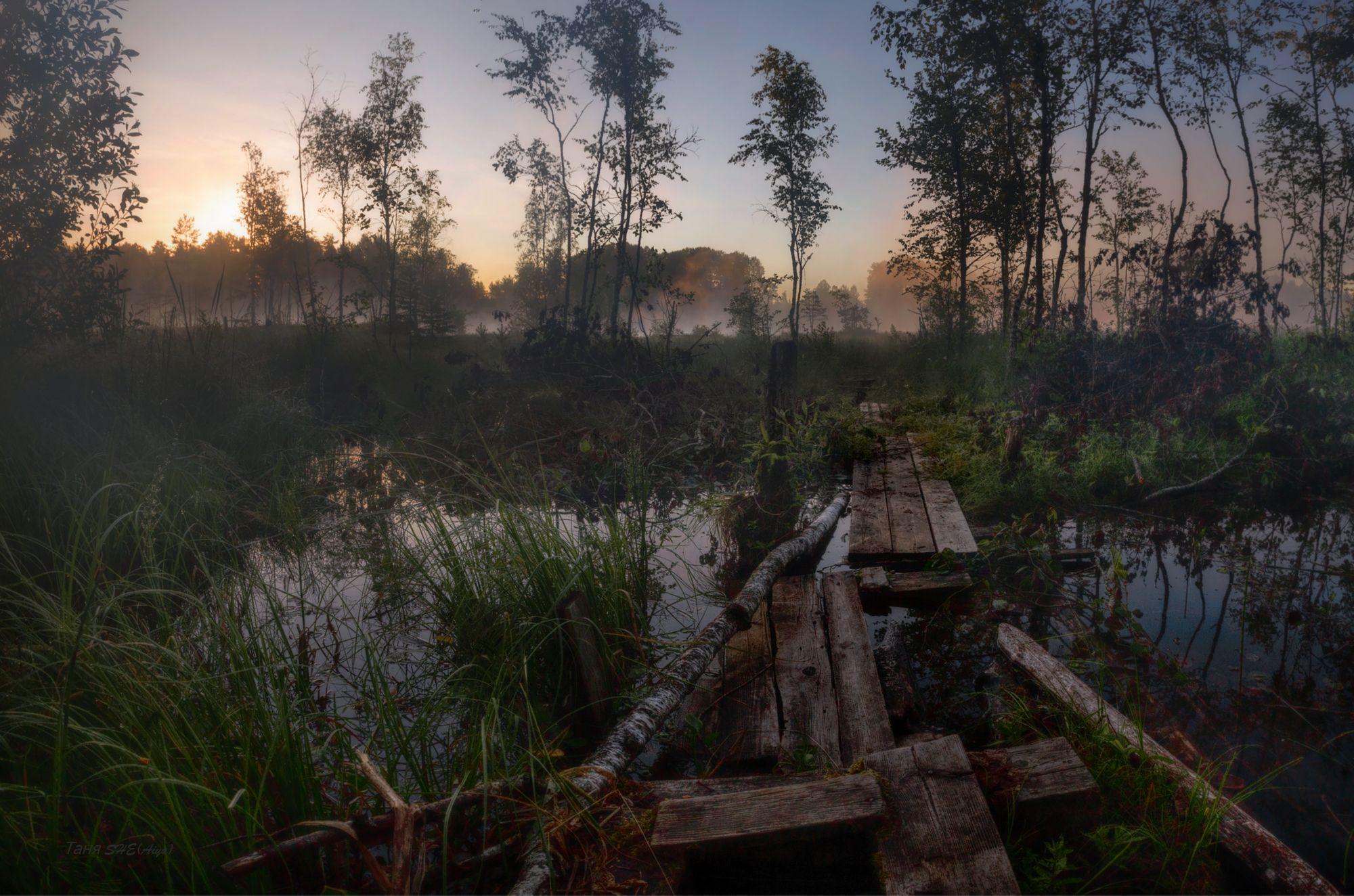 природа, пейзаж, рассвет, туман, луга, SHE (Aiya) Таня