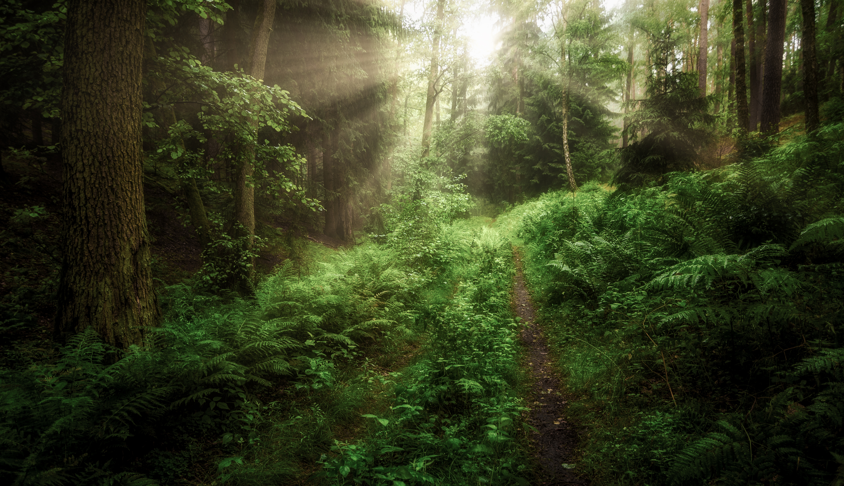 forest  trees  nature  morning  atmosphere  light  nikon  summer  stream  green  moss  ferns  woodland  deep in the forest, Tollas Krzysztof