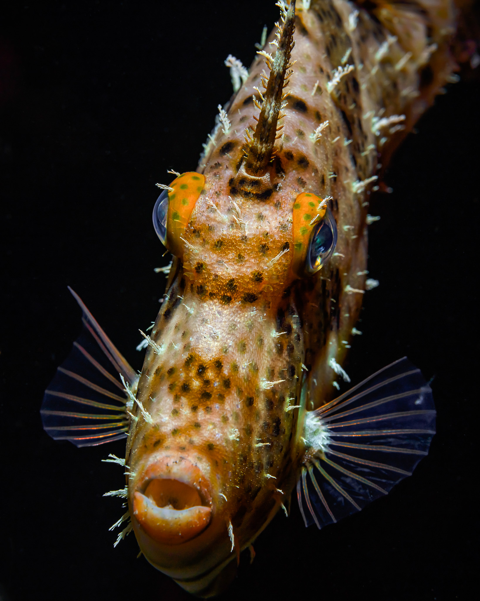 рыба, глаза, море, портрет, животное. под водой, природа, ночь, анфас, плавники, дайвинг, океан, , Савин Андрей
