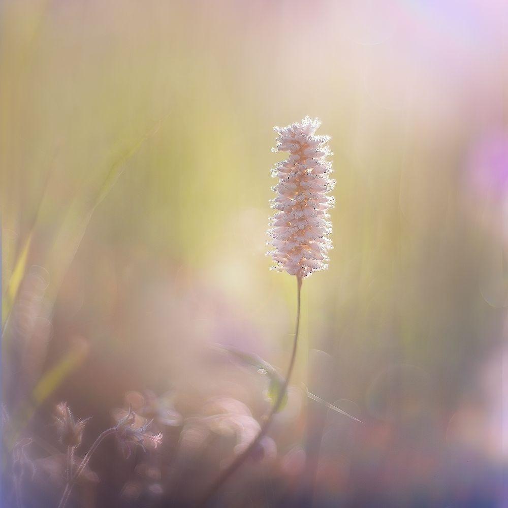 утро, свет, росинки, травинки, Заколдаева Ирина