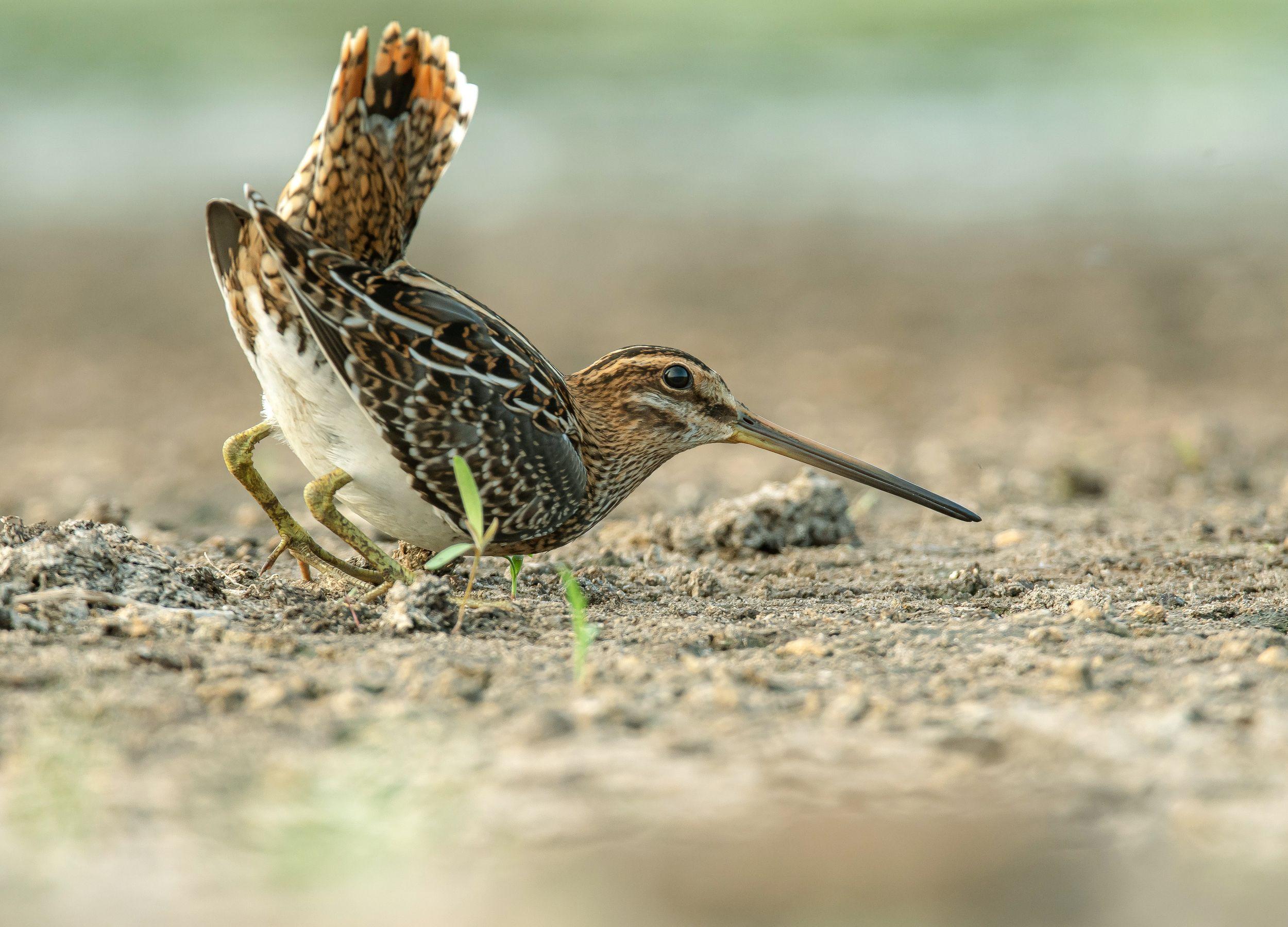 птицы,природа, лето, Киселёв Андрей