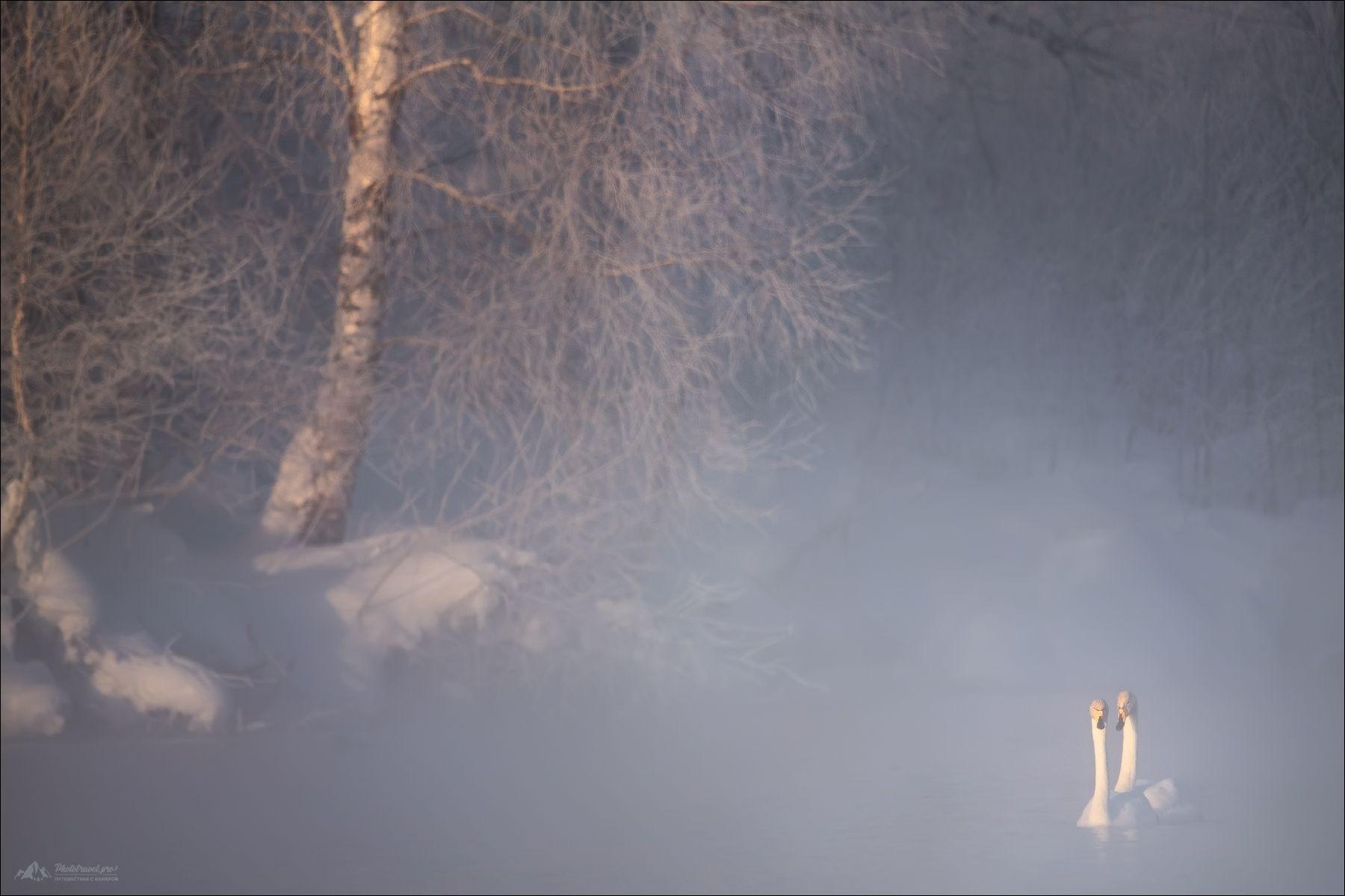 алтай, алтайский край, лебеди, озеро светлое, озеро лебединое, Влад Соколовский