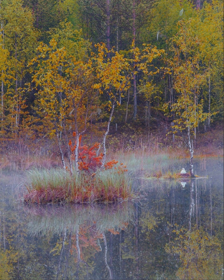 утро, туман, остров, птица, Петр Косых