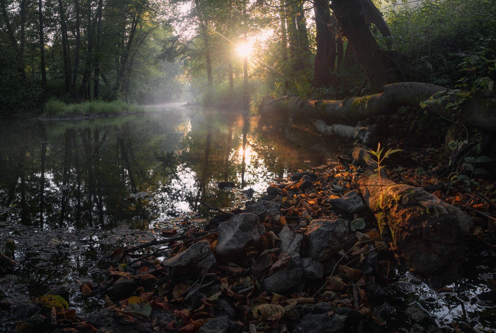 туман, свет, утро, природа, Баранов Олег