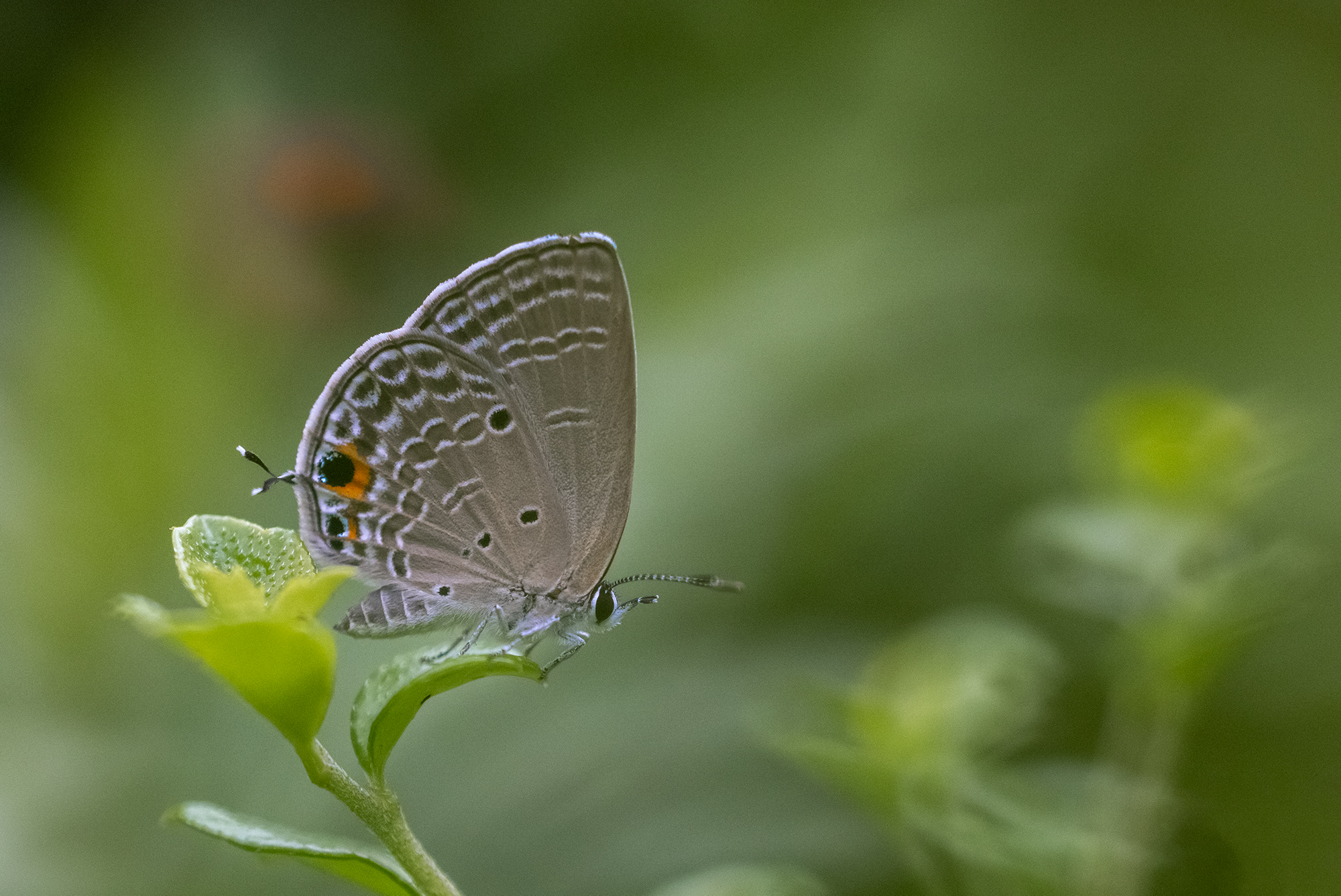 #butterfly, Chan Benny