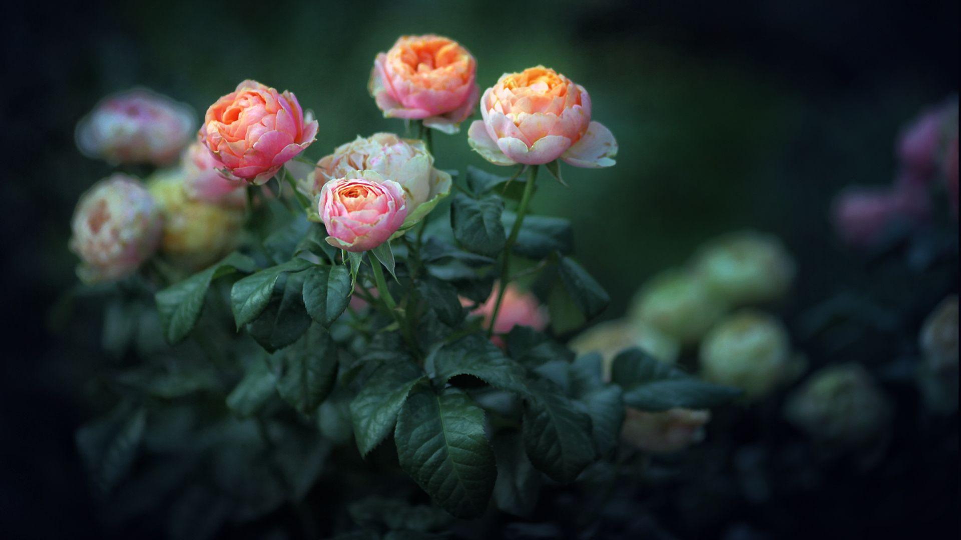 flowers, summer, full, hd, desktop, Serg