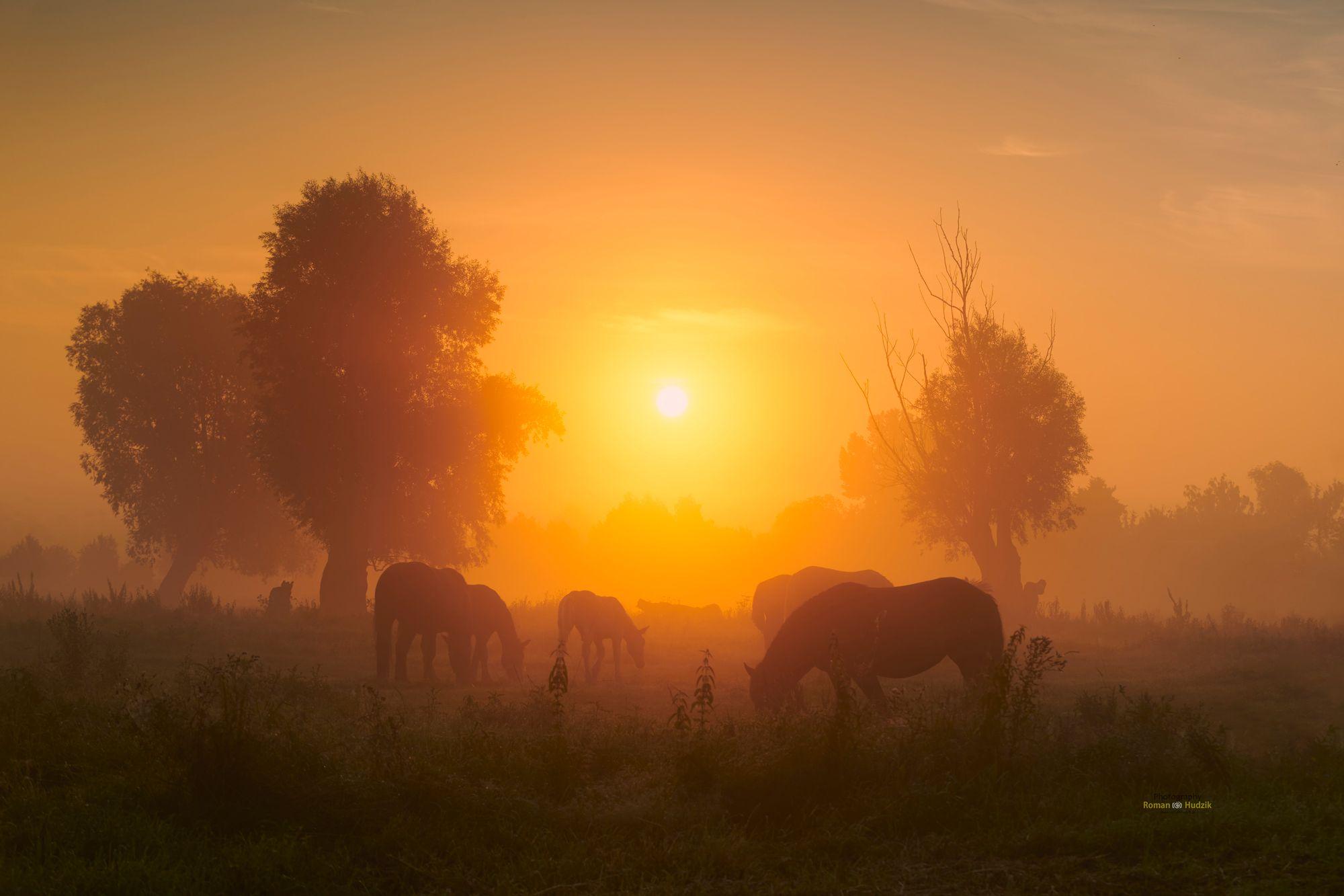 Horses, landscape, sunrise, fog, clouds, orange color, trees,, Hudzik Roman