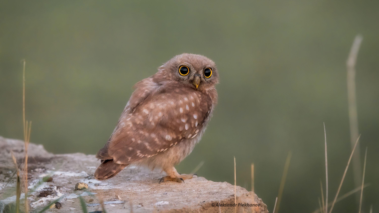 wildlife, Александр Плеханов