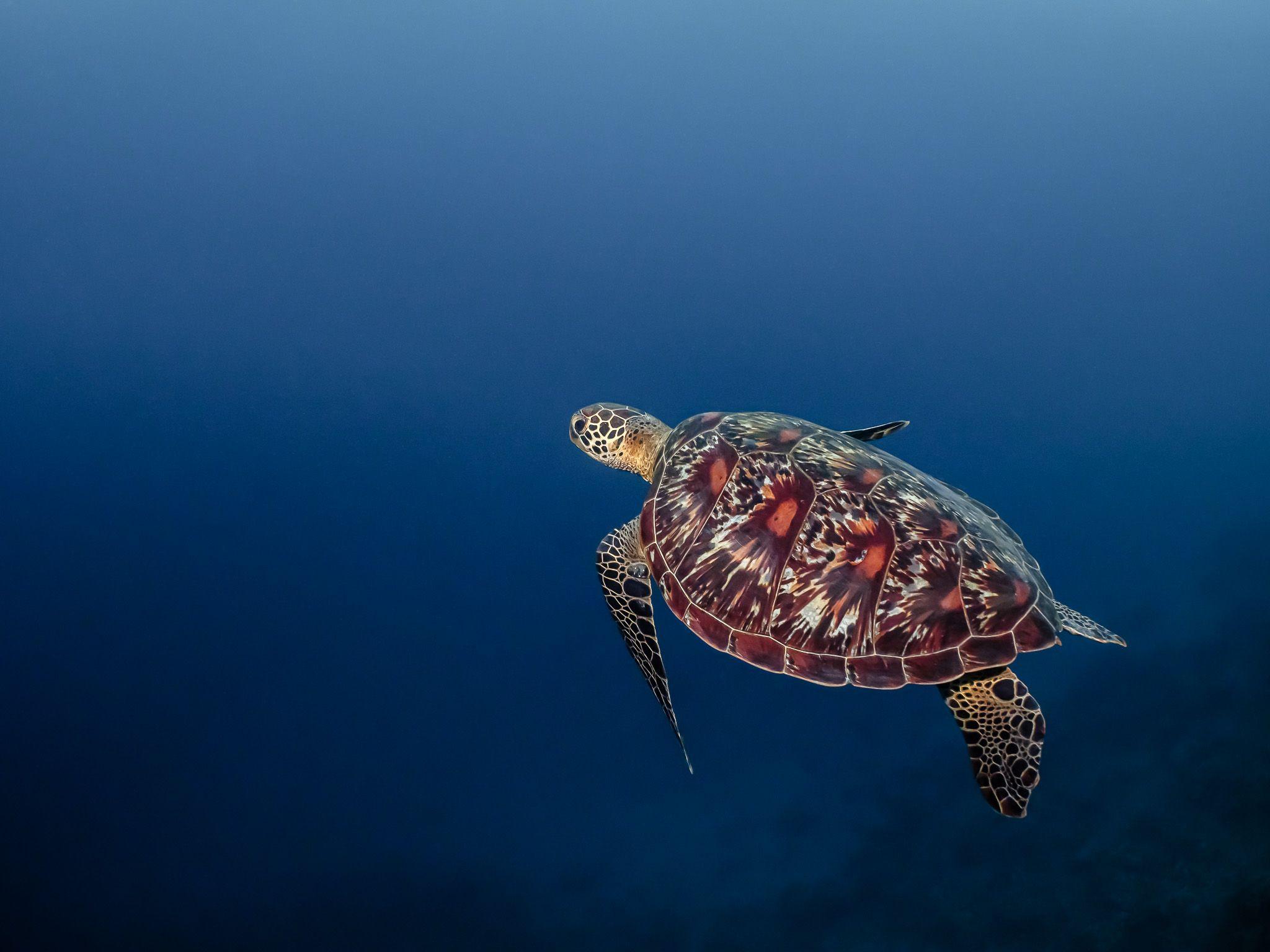 Подводная фотография, природа, макро, дайвинг, океан, рыбы, море, под водой, глубина, синева, вода, underwater, кораллы, риф, подводный, сноркелинг, фауна, underwater, wildlife, photography, ocean, sea, diving, Савин Андрей