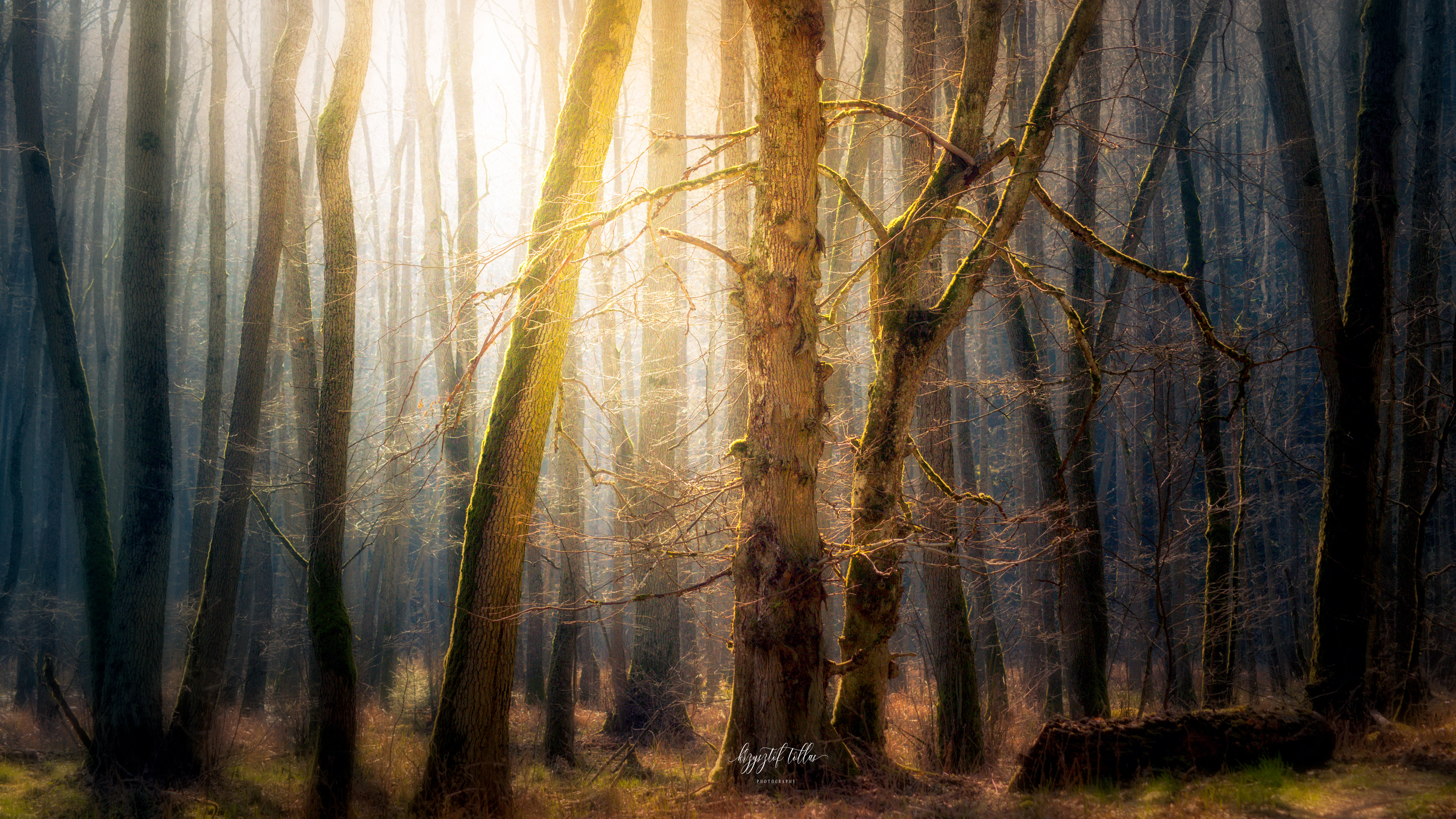 forest, natura, light, dawn, trees, forest atmosphere, nikon, mist, forest scenery, Tollas Krzysztof
