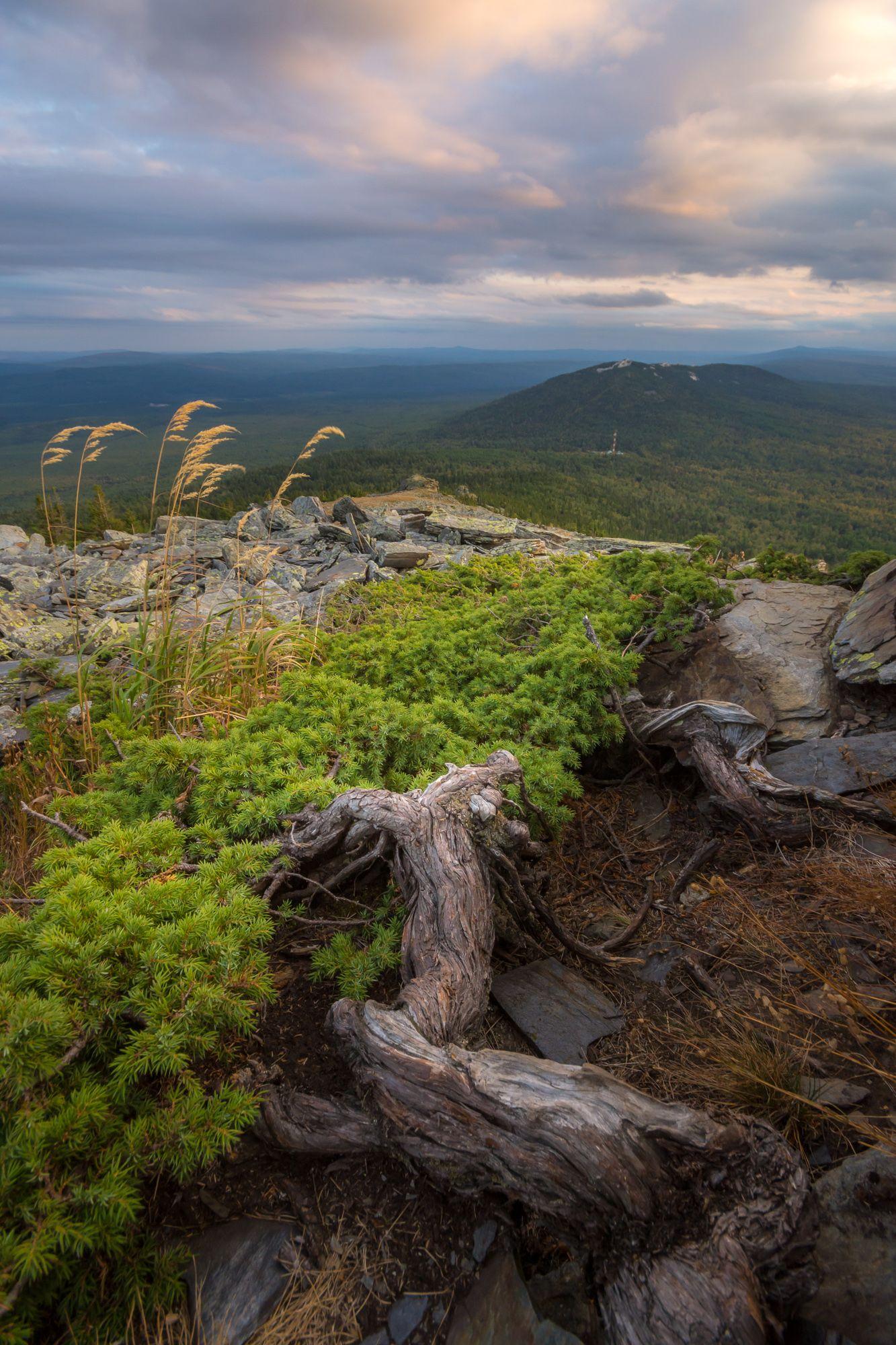 горы можжевельник вечер урал лето, Жданов Дмитрий