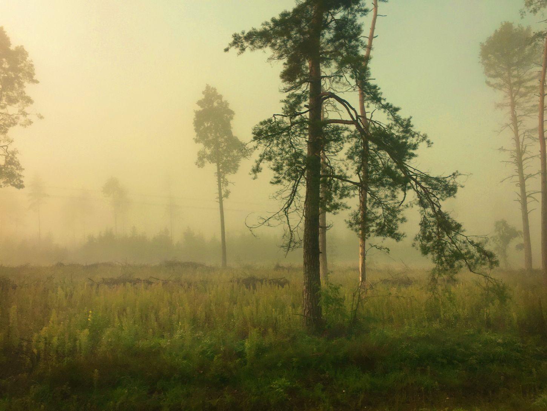утро, туман, Валерий Козуб