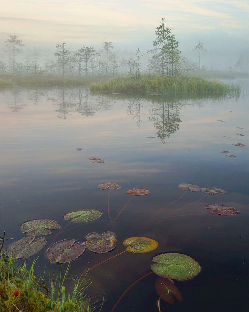 болото, утро, туман, Петр Косых
