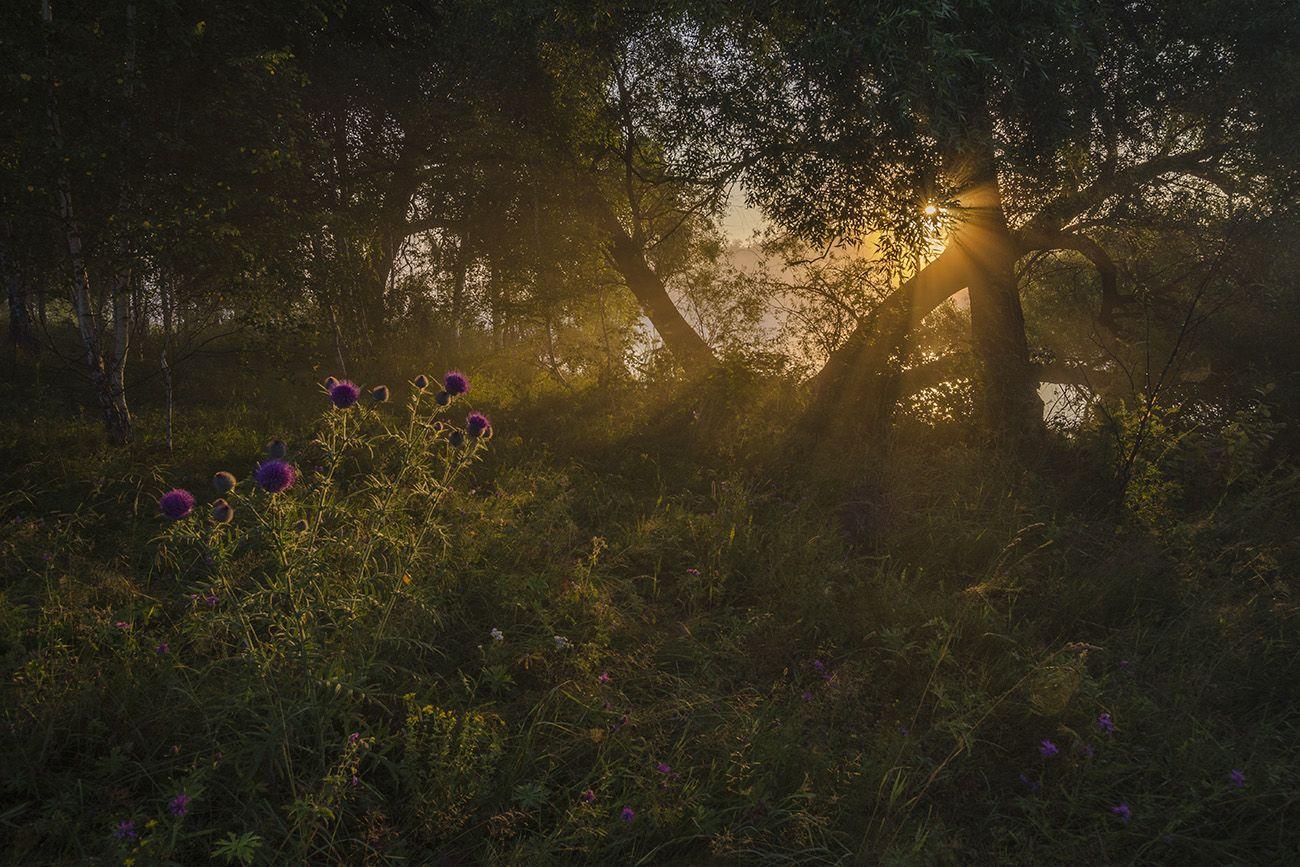 лето, утро, чертополох, Михаил Агеев