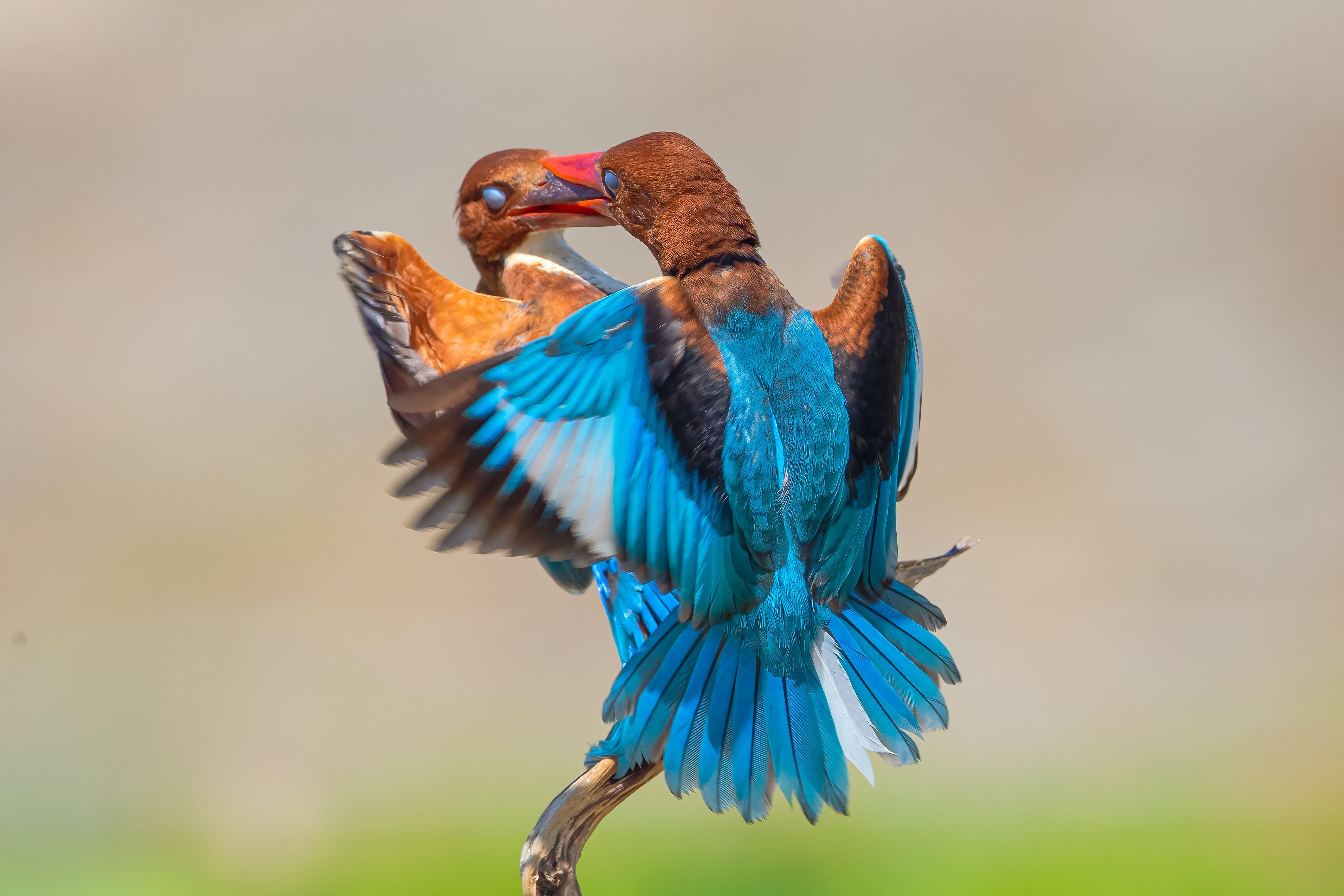 bird , vorin, Võ Rin