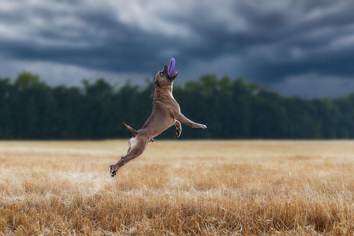 собака, животное, dog, с, Евгений Крутиков