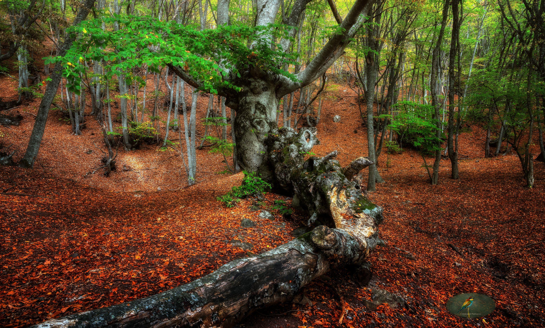 autumn, Plekhanov Alexander