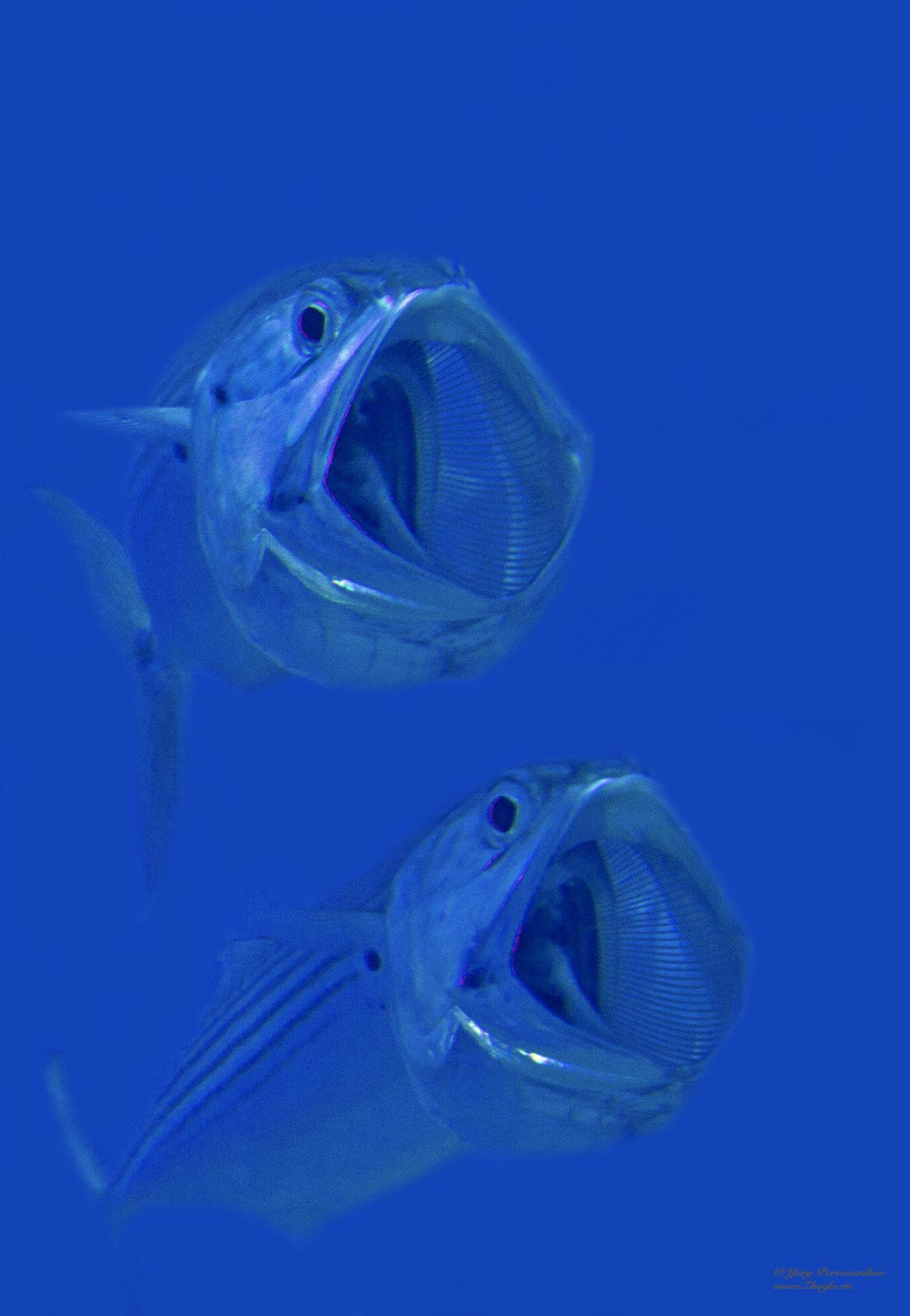 подводный мир дайвинг дайвинг сафари египет хургада обучение дайвингу zhoglo  красное море, Перевозников Юрий