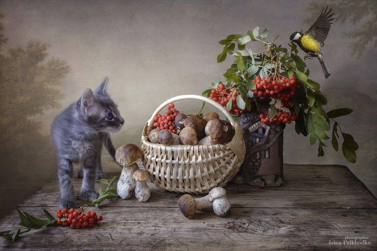 осень, грибы, рябина, котенок, домашние животные, питомцы, синичка, натюрморт, постановочное фото, Приходько Ирина