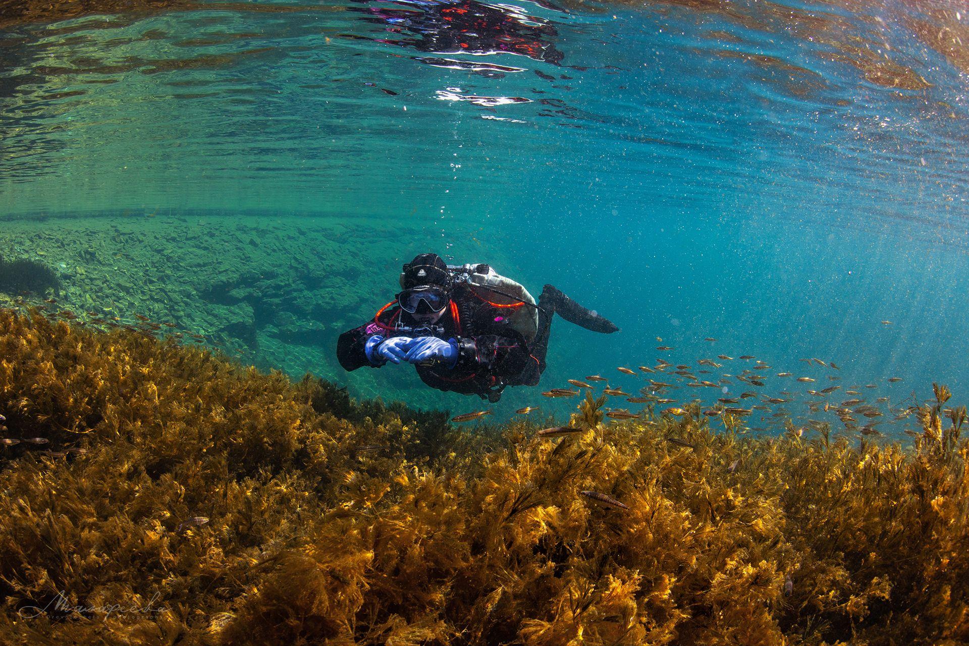 подводное фото, налим, вода, дайвер, источник, Малафеева Елена