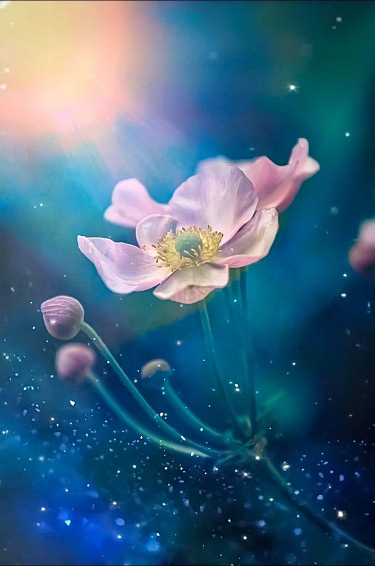 макро, цветы, flowers, macro, анемона, Julia Kaissa