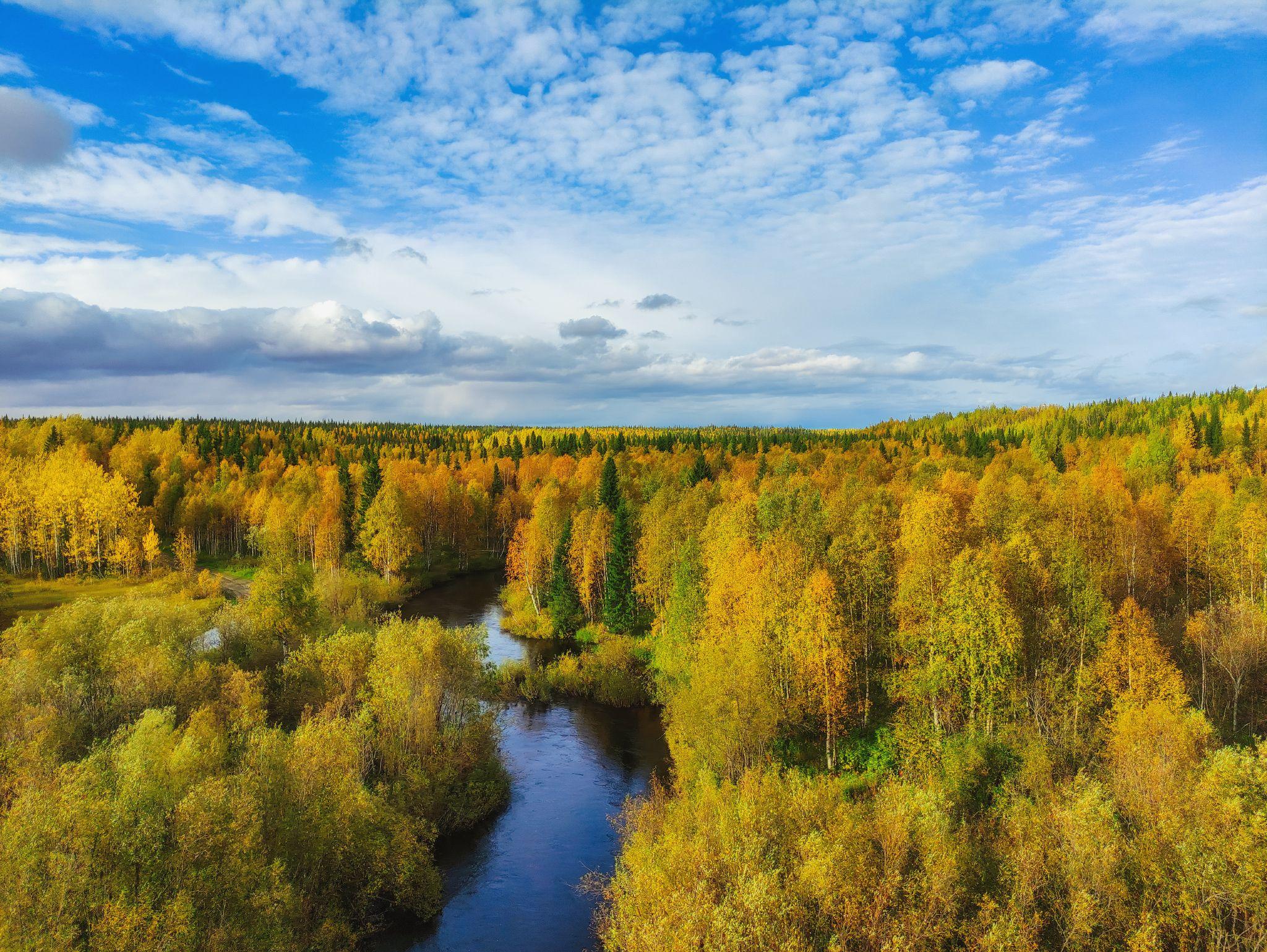 печора, лес, север, Игорь Подобаев
