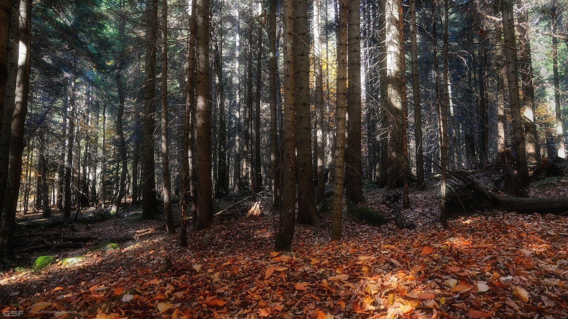 природа осень лес пейзаж, Serj Master