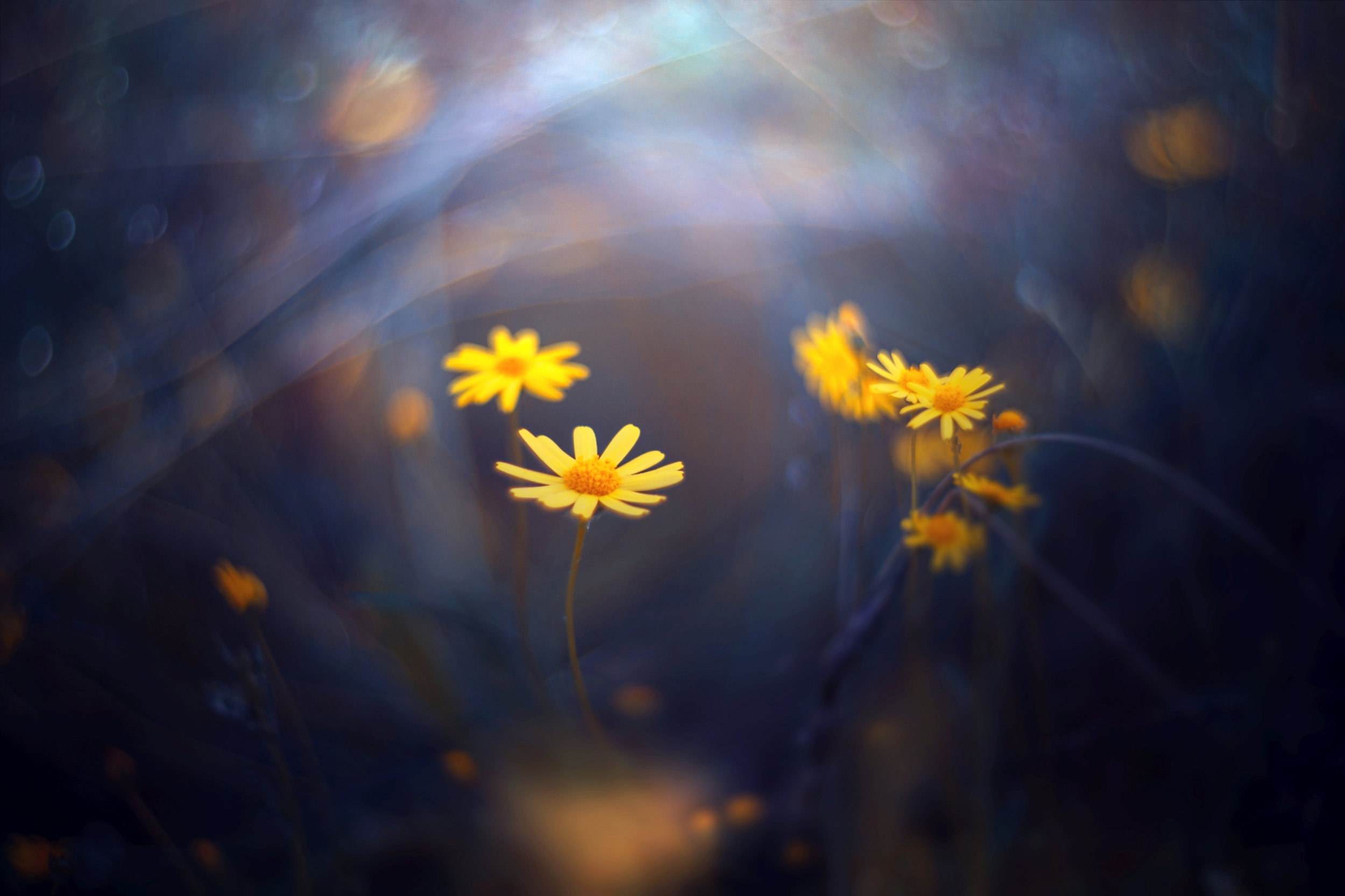 green,bokeh,zenit,helios,85mm,flowers,nature,blue,yellow,orange,light,dark,, Борислав Алексиев