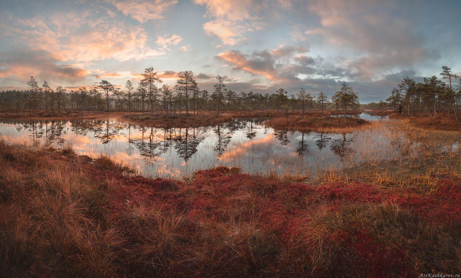 ленинградская область, ленобласть, болото, болотное озеро, мох, сосны, отражение, краски осени, Арсений Кашкаров