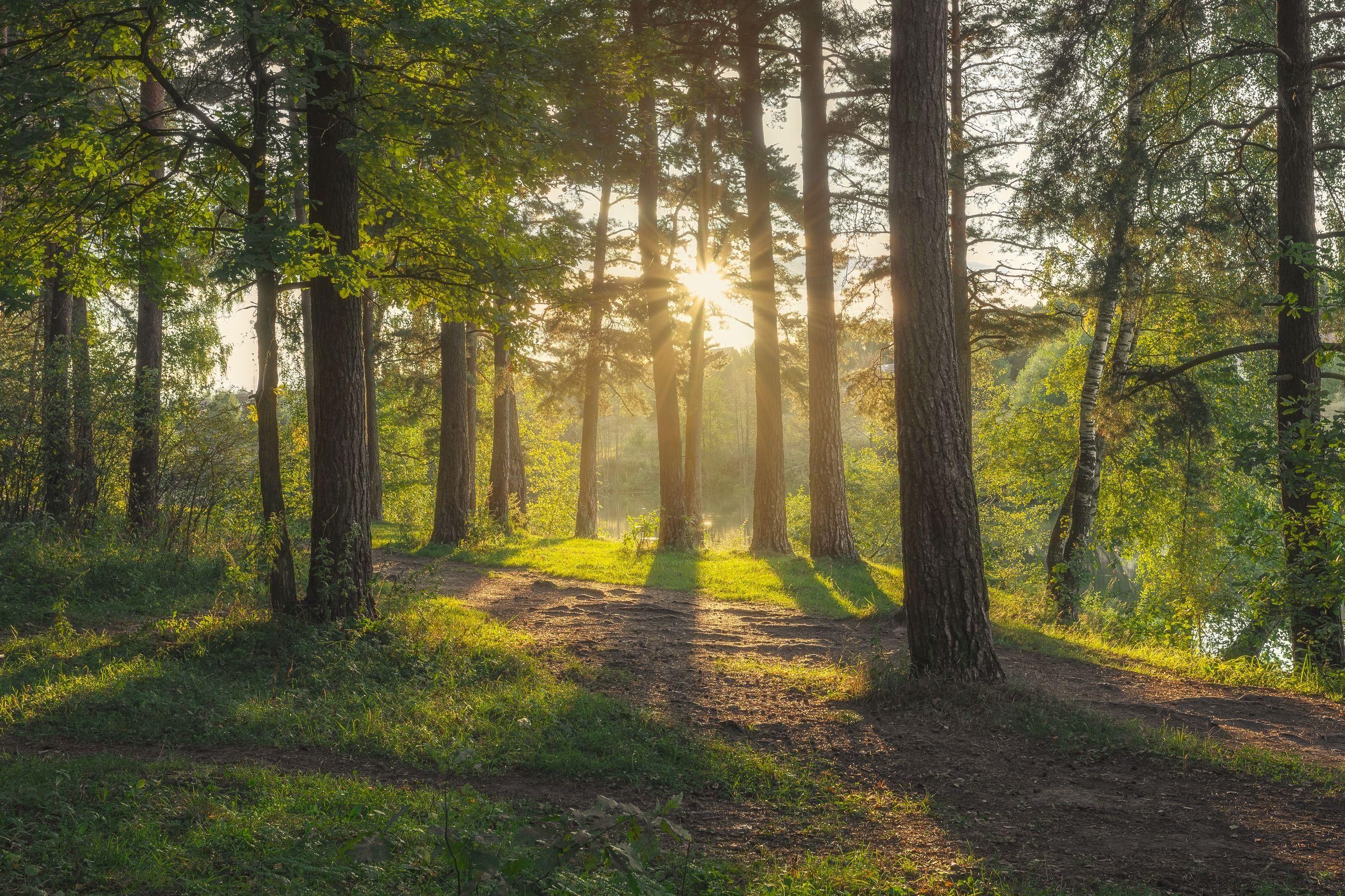 закат, природа, Московская область, лес, сосны, пейзаж, осень, Мартыненко Дмитрий