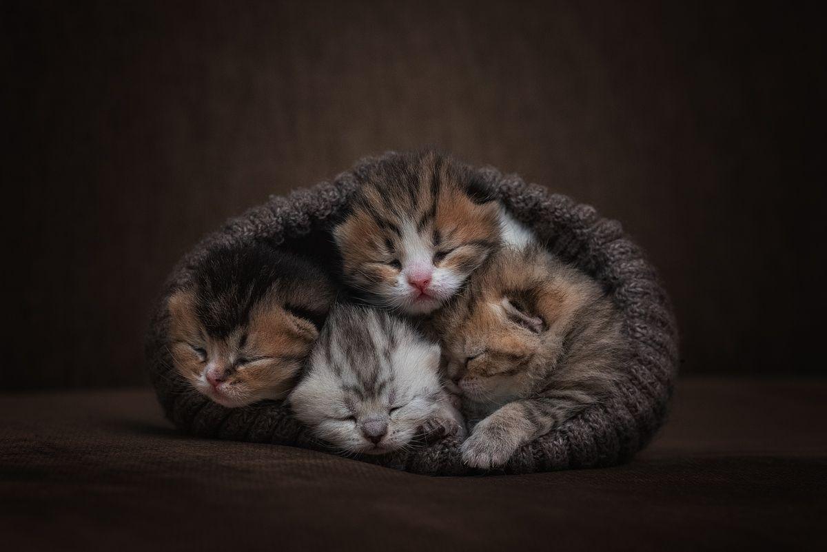котята, кошка, cat, Евгений Крутиков