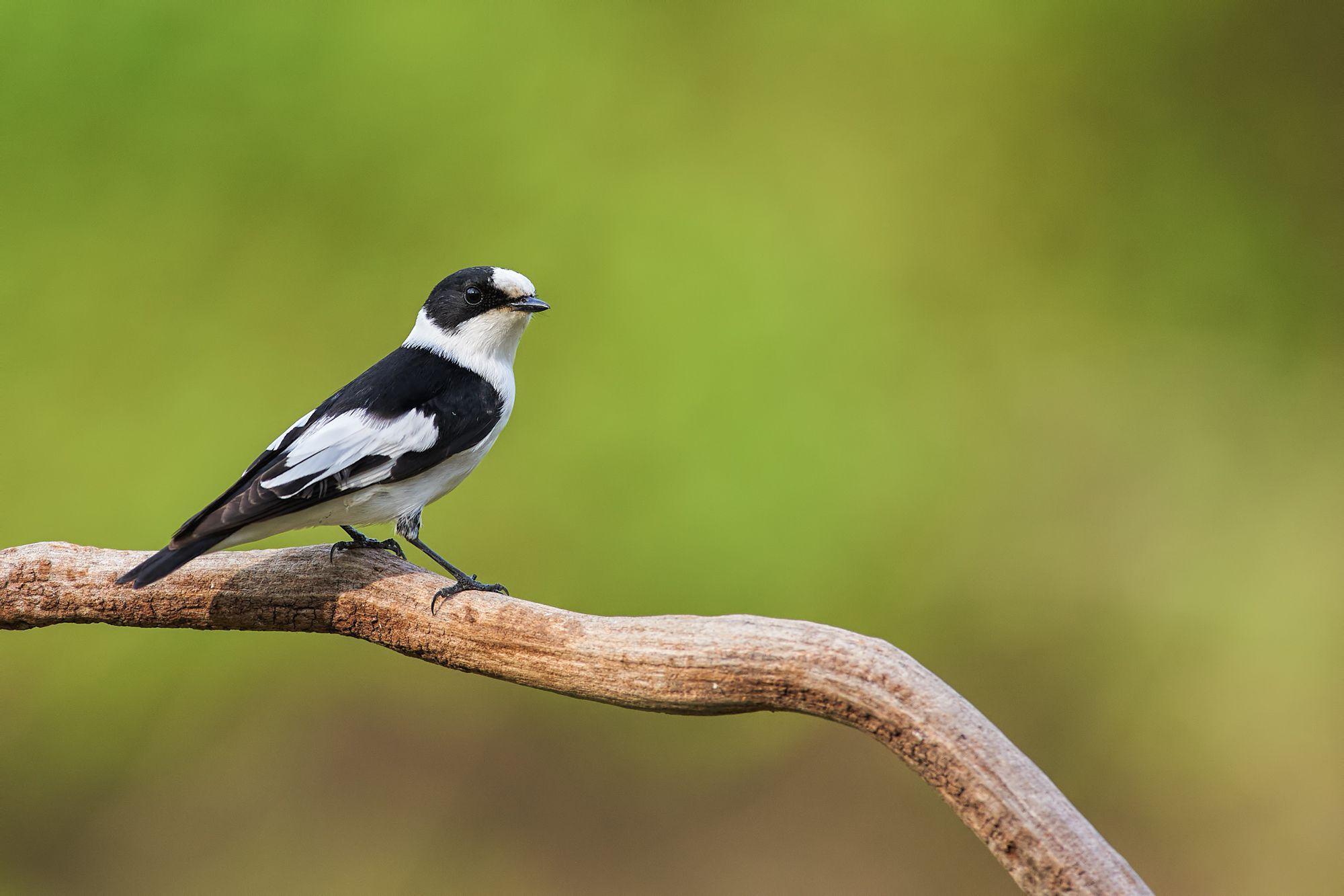 nature, wildlife, birds, Ботев Калин