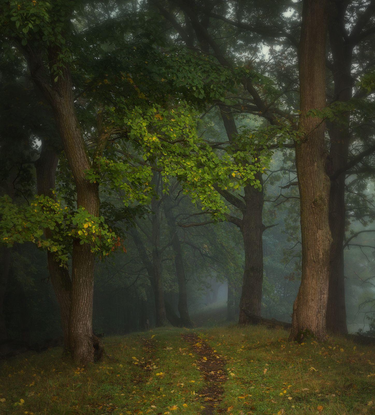 природа утро туман деревья, Корнилов Михаил