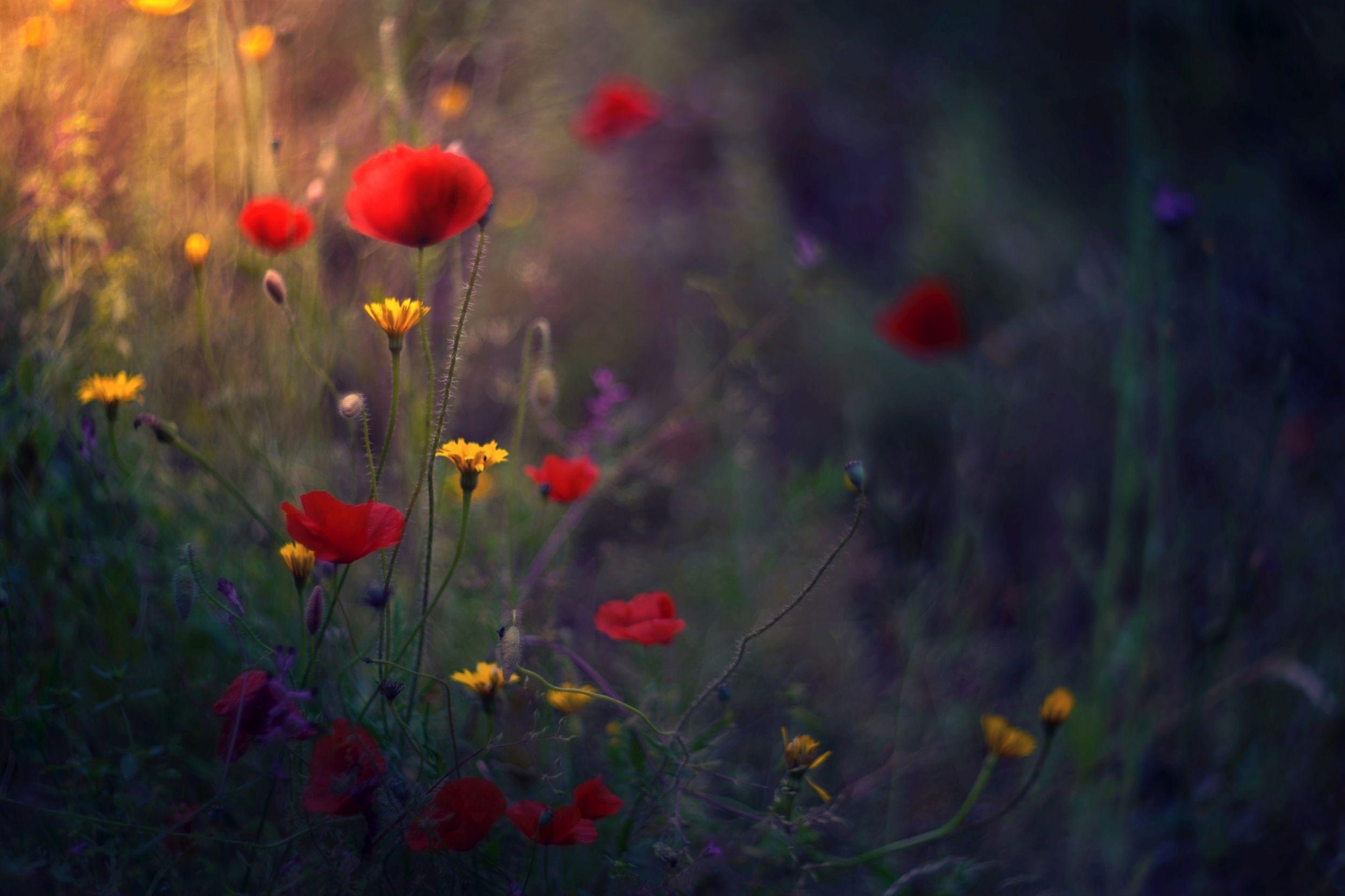 green,bokeh,zenit,helios,85mm,flowers,nature,blue,yellow,orange,light,dark,bee,pink,red,, Борислав Алексиев
