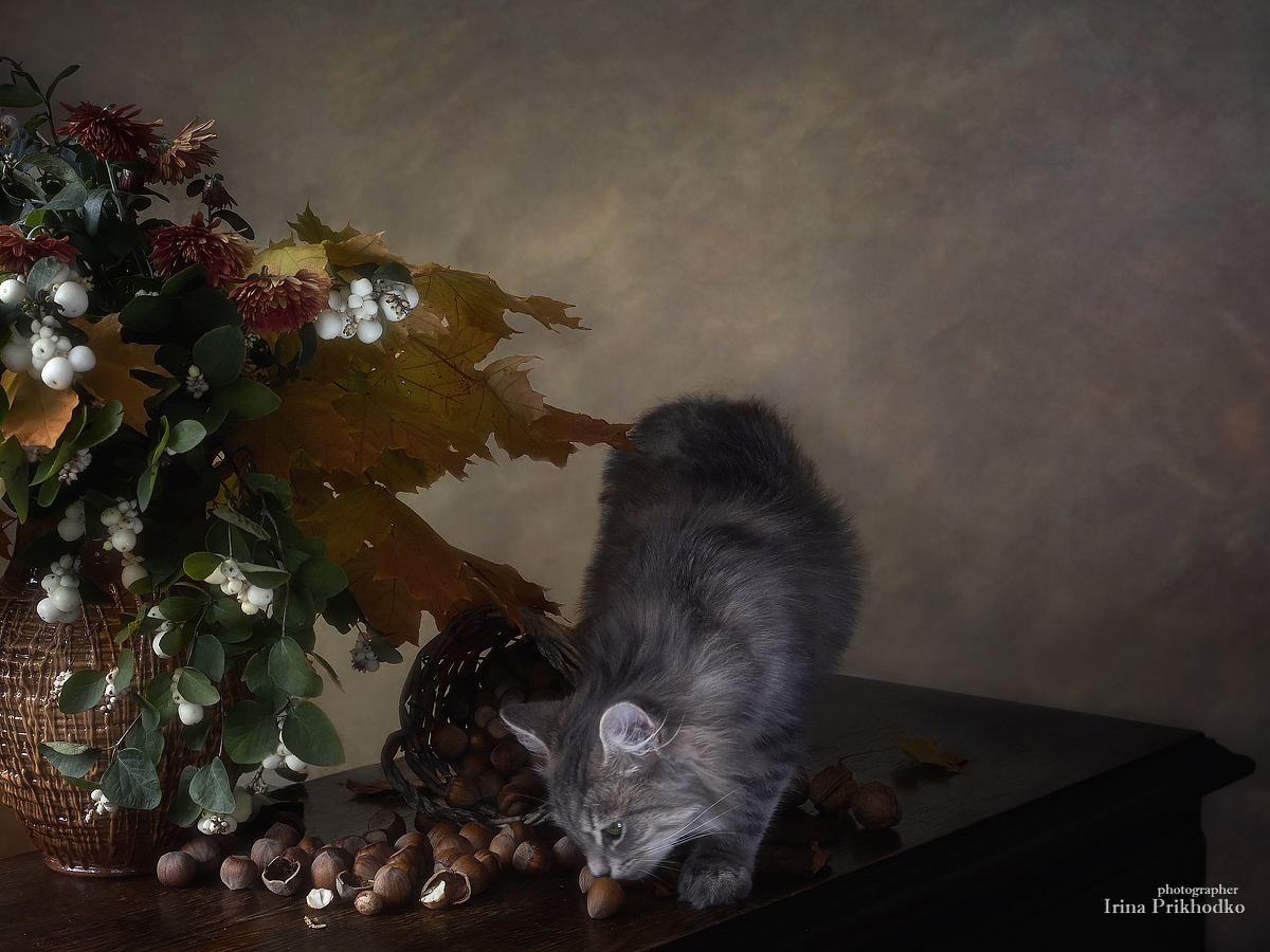 постановочное фото, осень, осенний букет, орехи, любопытный котенок, Приходько Ирина